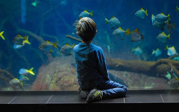 a kid watching fish in the aquarium