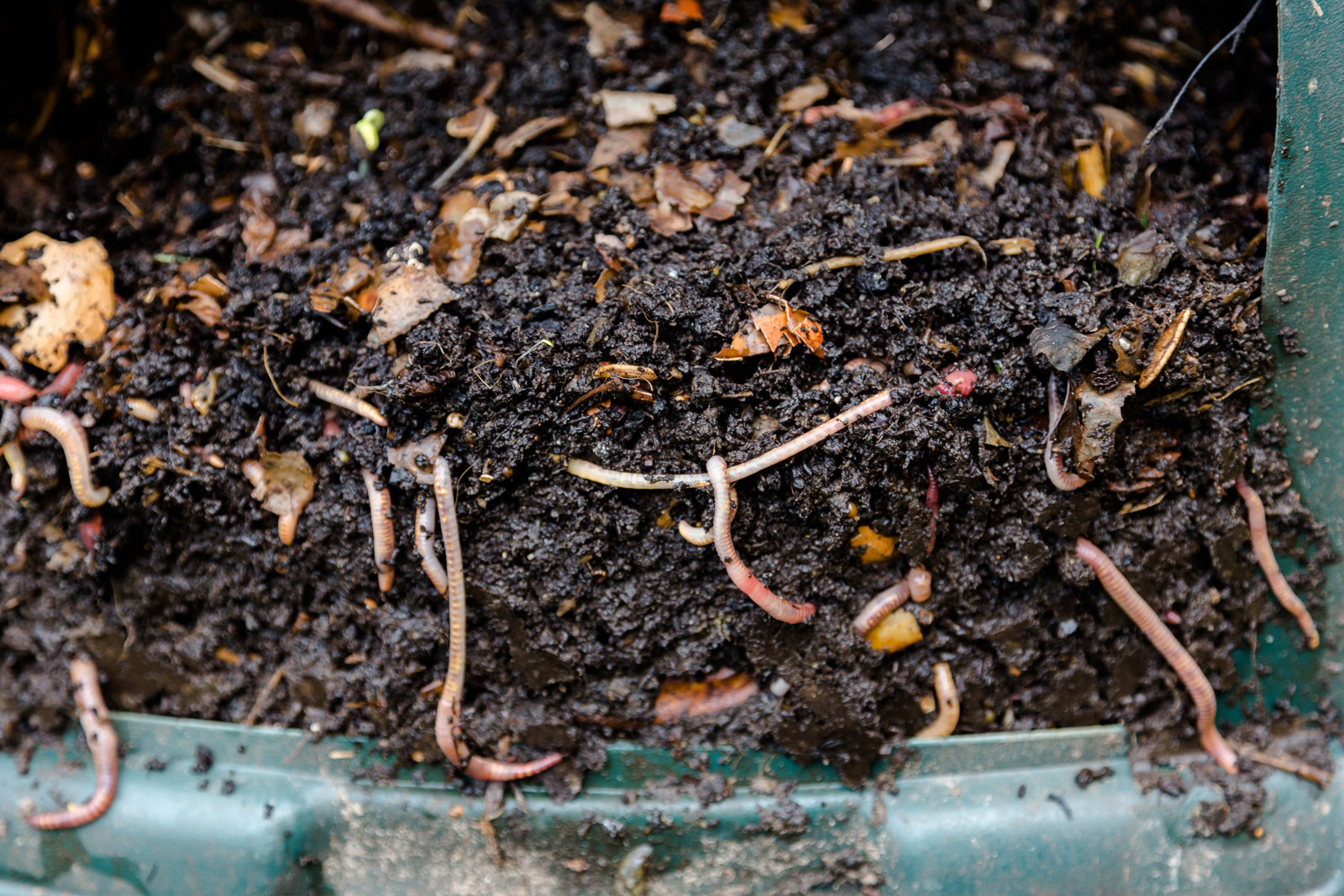 Cherie-Barber_Renovating-For-Profit_Green-worm-compost