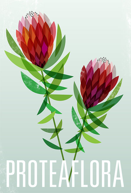 Protea Flora