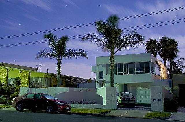 Palms by Bill Lane