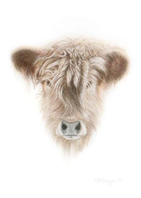Aviva Kalagas Cow