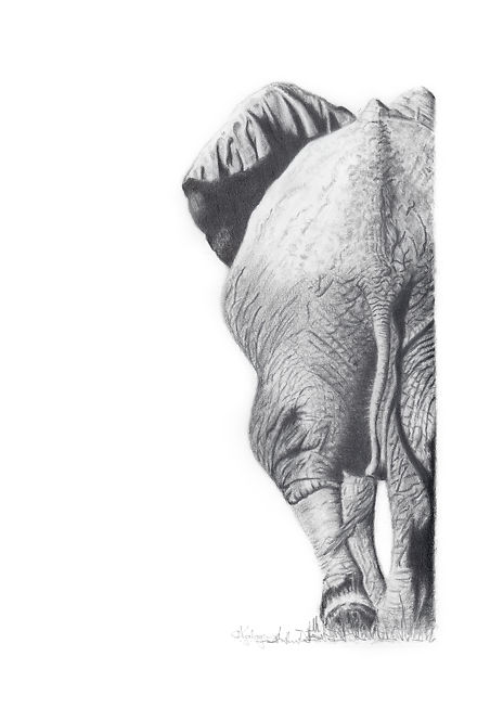 Aviva Kalagas Elephant