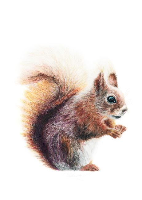 Aviva Kalagas Squirrel