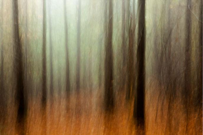 Drew Echberg Treelines 1