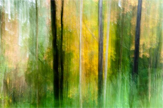 Drew Echberg Treelines 11