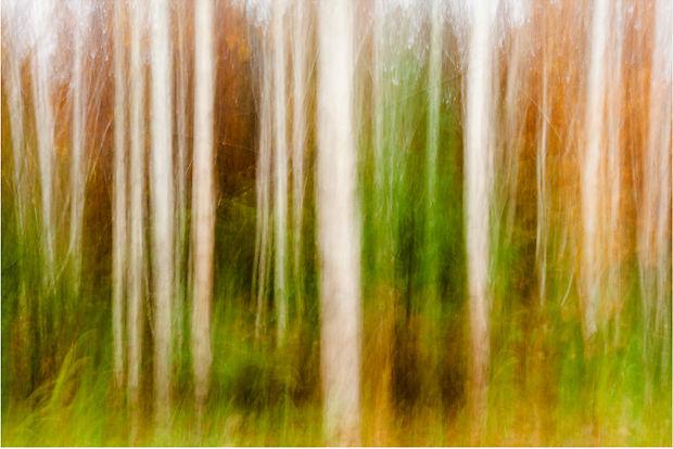 Drew Echberg Treelines 2
