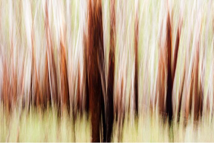 Drew Echberg Treelines 7