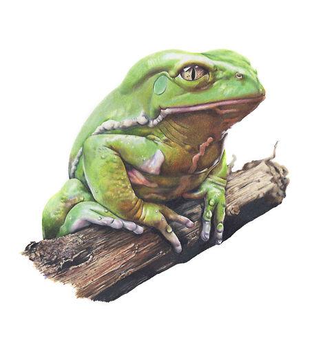 Julio the Frog - Helen Grey