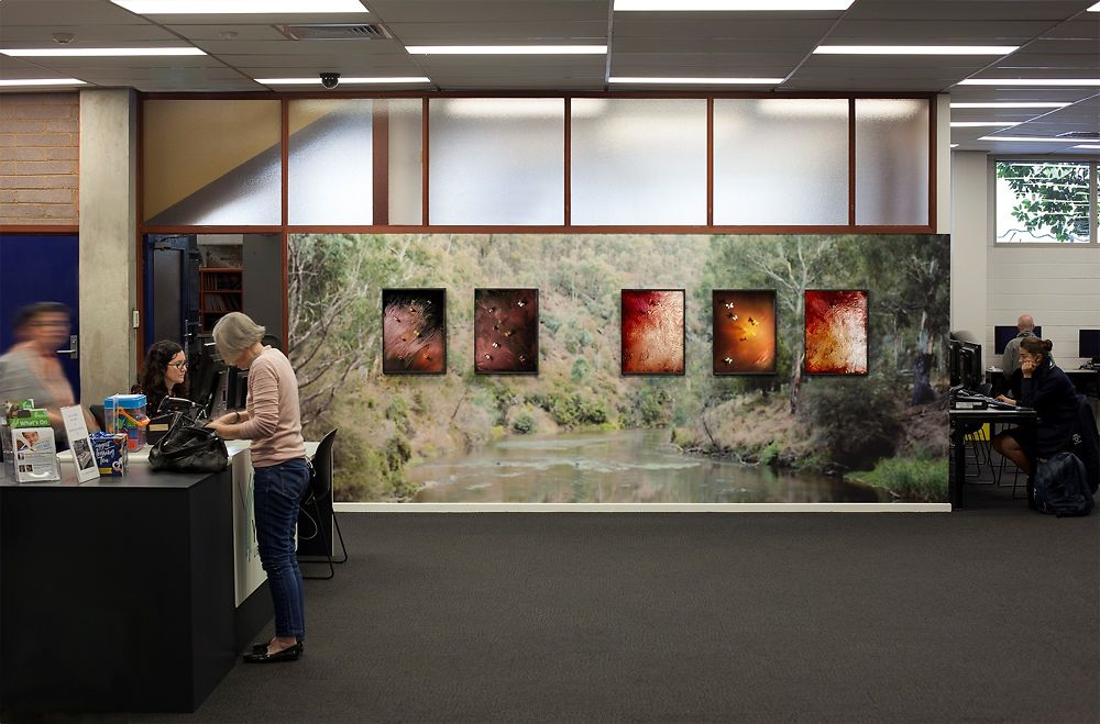 Peta Clancy Aurelian Installation 5 x Framed Ink jet pigment prints, adhesive wallpaper print Installation view, Richmond Library 2017