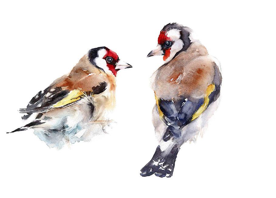European Goldfinch - Qing Zhang