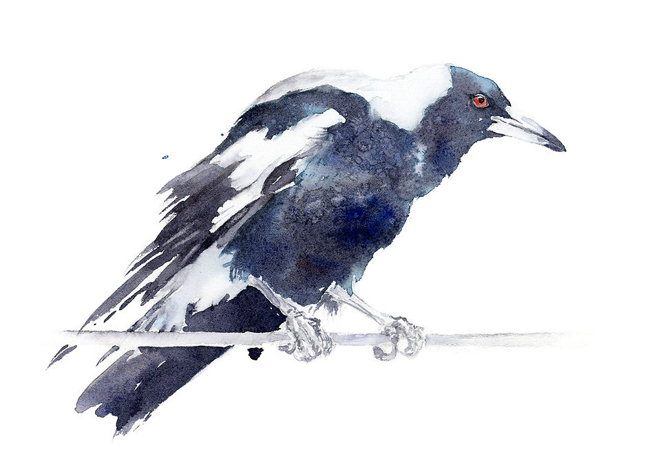 Magpie - Qing Zhang