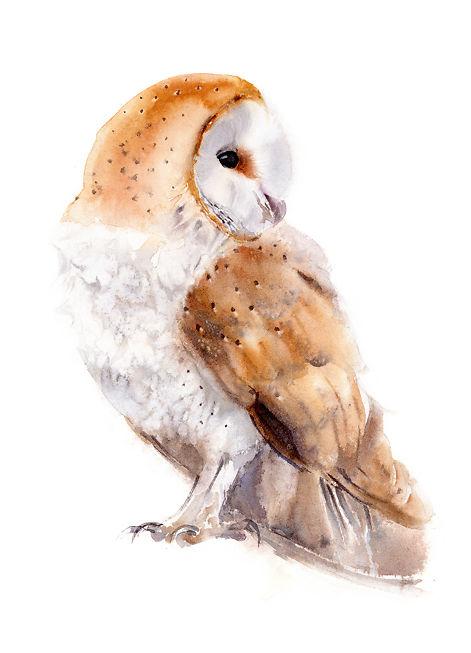 Owl - Qing Zhang