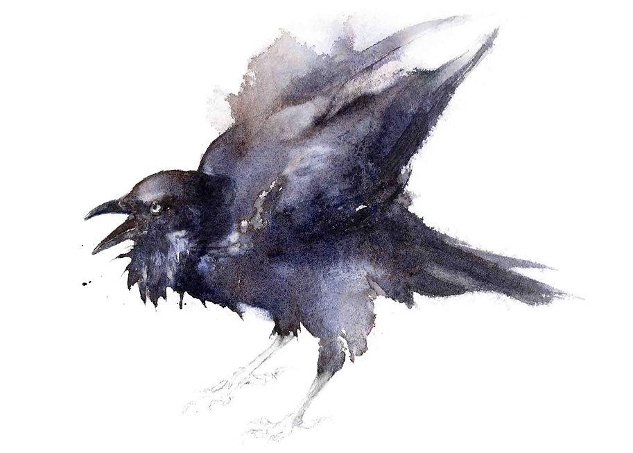 Raven - Qing Zhang