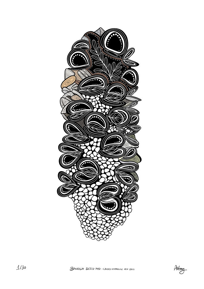 Banksia Seed Pod by Anli Vuong, illustrated, signed, titled and editioned uniquely by hand using Procreate on an iPad Pro.