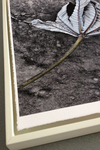 Hahnemühle William Turner Deckle Edge 310gsm Master Image