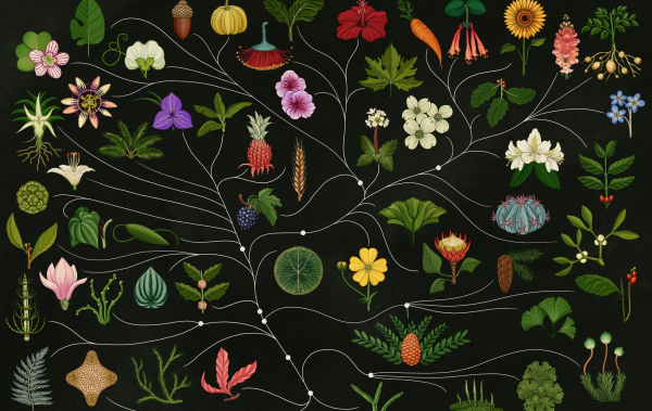 Flora and Fauna Illustrations