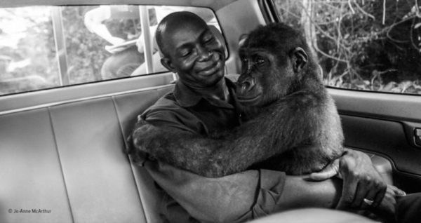 This award-winning photo of a baby gorilla hugging the man who saved her life will warm your heart