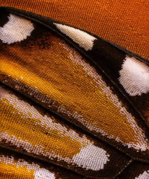 macro photography discovers detailed patterns of butterfly wings shot by chris perani