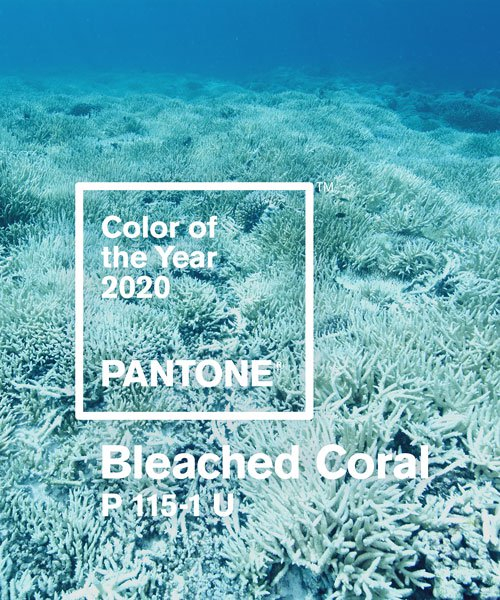 jack + huei suggests pantone to help raise awareness of dying coral in 2020