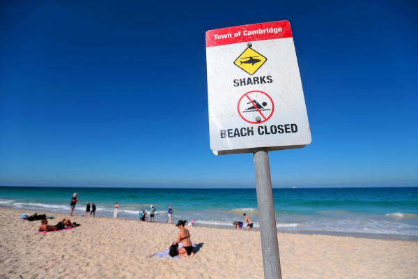 Shark alarms for City and Floreat beaches