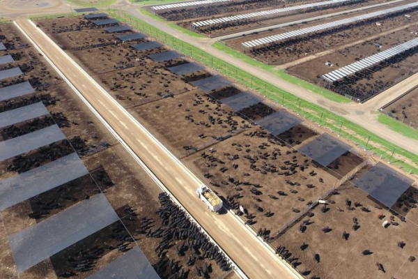 Feedlot definition causes problems for drought-affected farmers