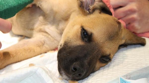 RSPCA reports shocking animal abuse rise in Western Australia