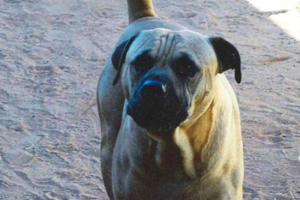 Magistrate issues hefty fine over a dangerous dog attack