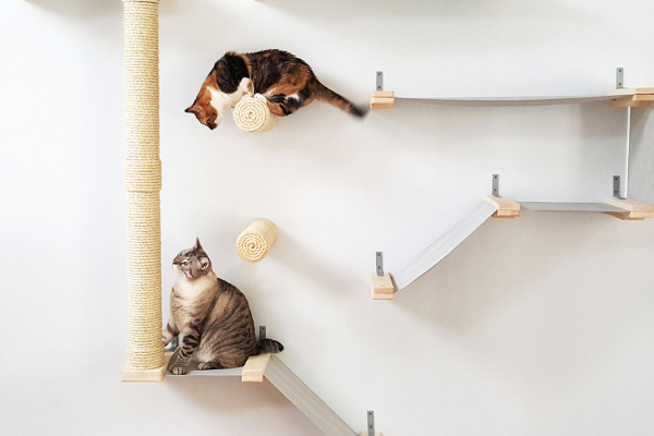 Entice and Entertain your cats with these product designs!
