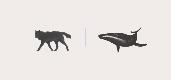 Are you a Wolf or Whale? Portfolio Case Study