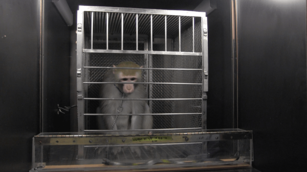 10 Horrible Things NIH Does to Monkeys With Your Tax Dollars