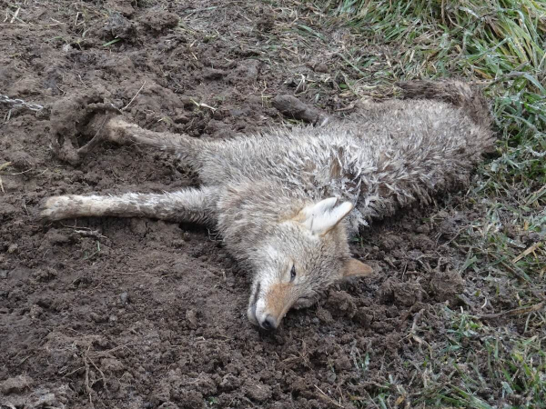 'Reclaimed Fur' Was Never Ours to Claim in the First Place