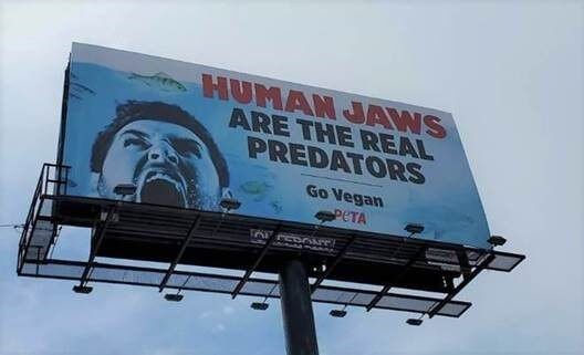 New Ad Near 'Jaws' Film Location Says Humans Are the Real Predators