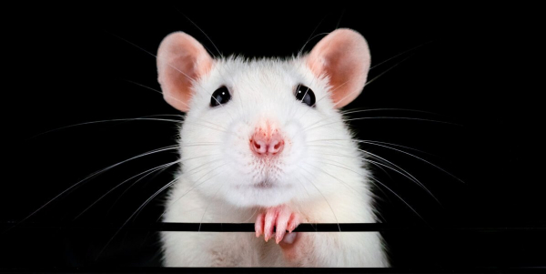 Will Killing Countless Animals Actually Help Treat Alzheimer's?