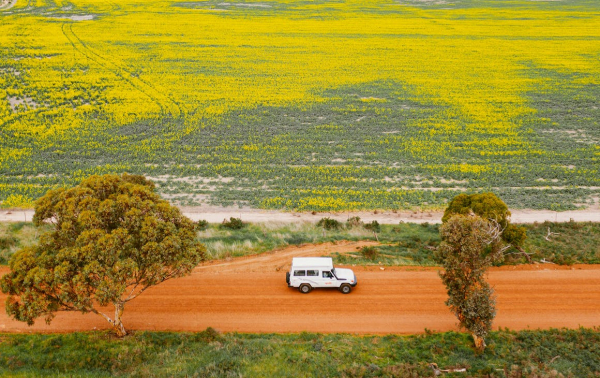 Fill Up The Tank And Head Off On This Jaw-Dropping Wildflower Road Trip