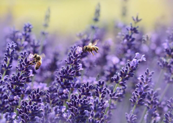 Small but Powerful—Here's the ONE Thing You Can Do to Help Bees