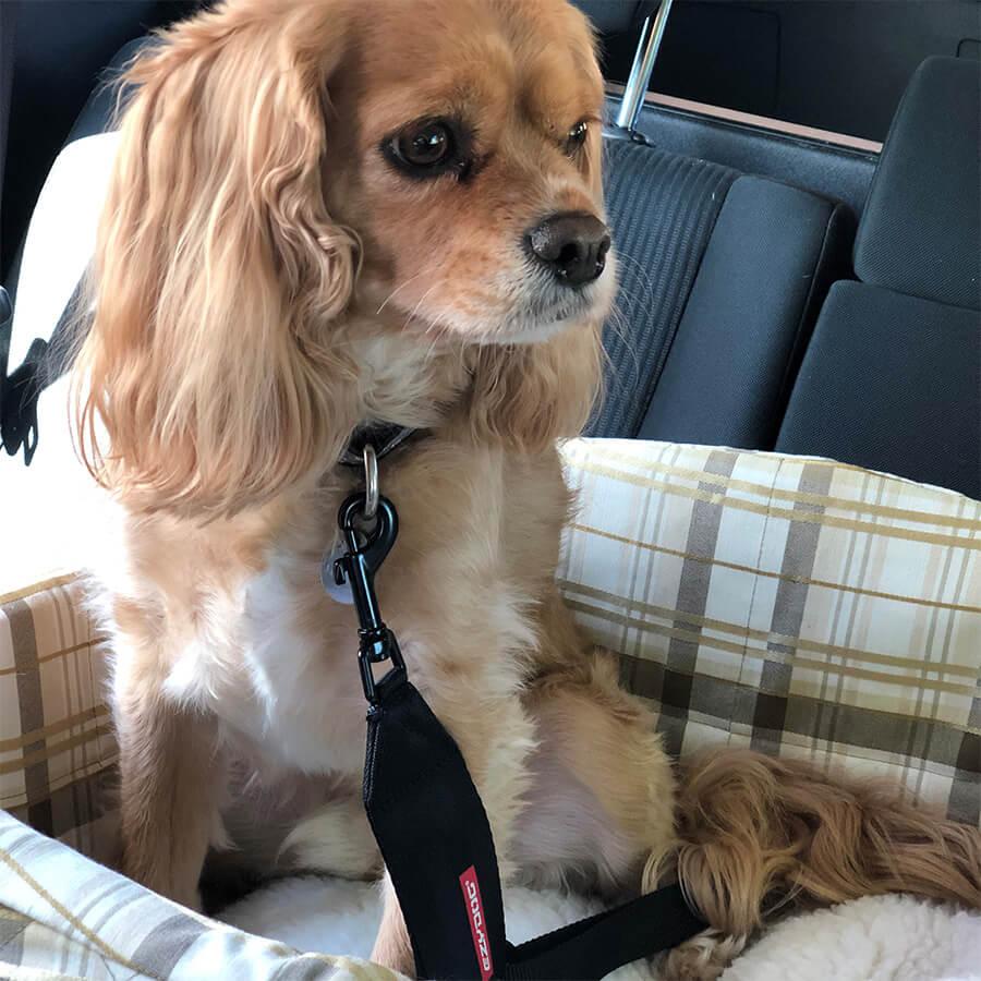 Seat Belt Restraint
