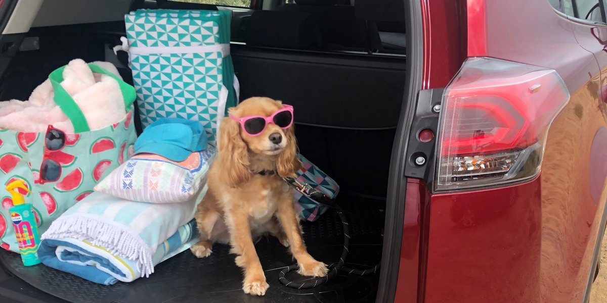blog large image - The Best Gear for Pet-Friendly Holidays