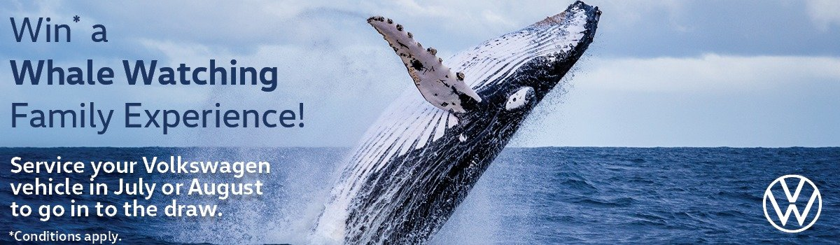 WIN* a Family Whale Watching Adventure Large Image