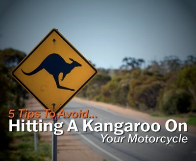 5 Tips To Avoid Hitting A Kangaroo On Your Motorcycle image
