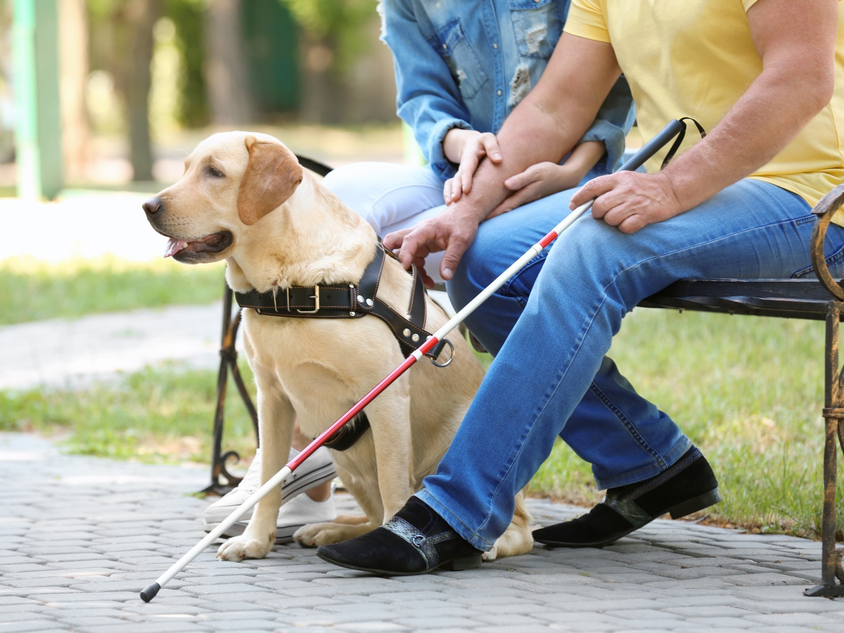 How assistance dogs can help people with disability