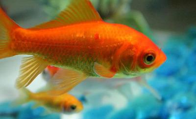 Teaser fishthumb