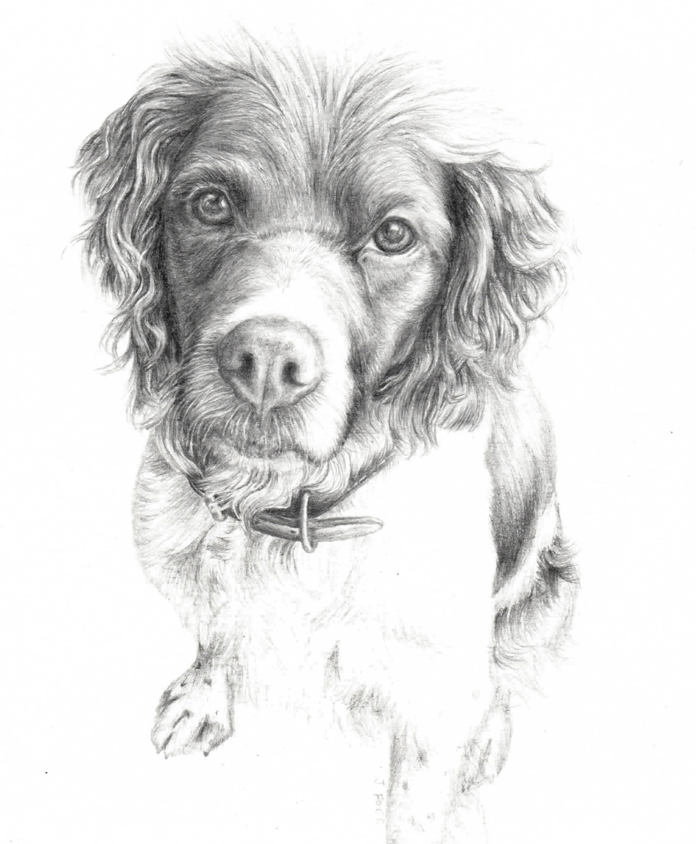 Learn To Draw a Pet Portrait in Graphite | Jessie Rose Ford