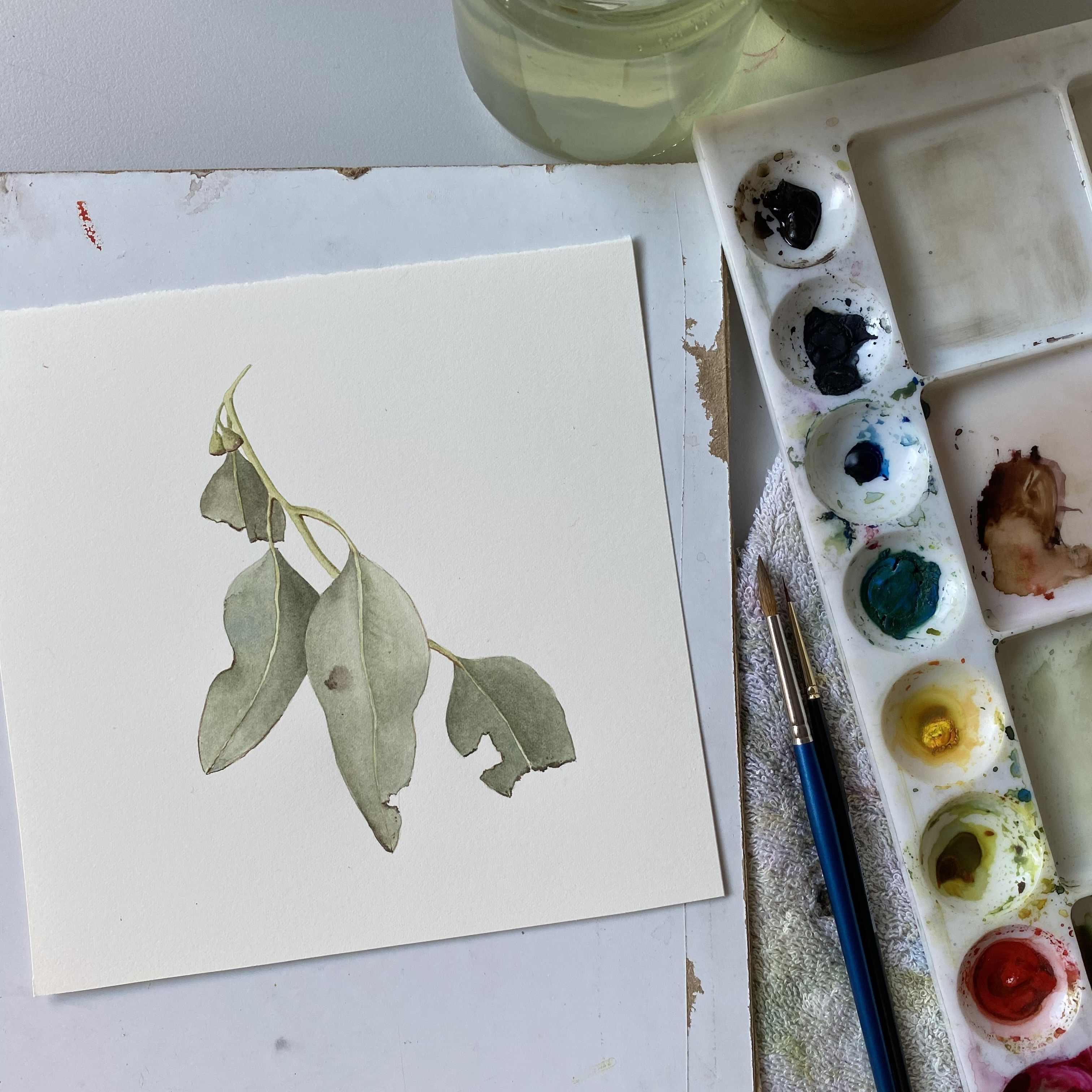Introduction to Botanicals in Watercolour | Jessie Rose Ford