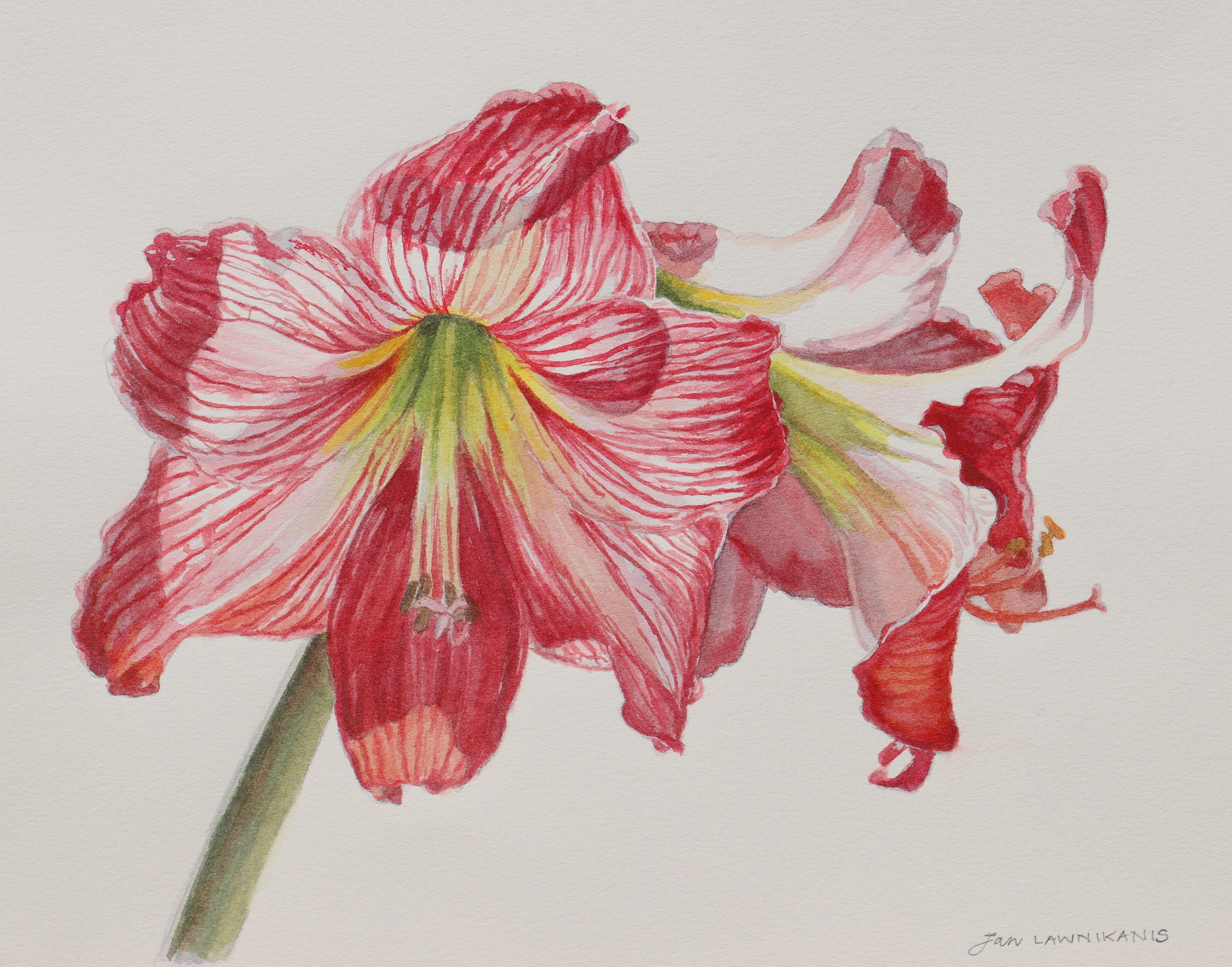 Botanical Art in Watercolour for Beginners | Jan Lawnikanis