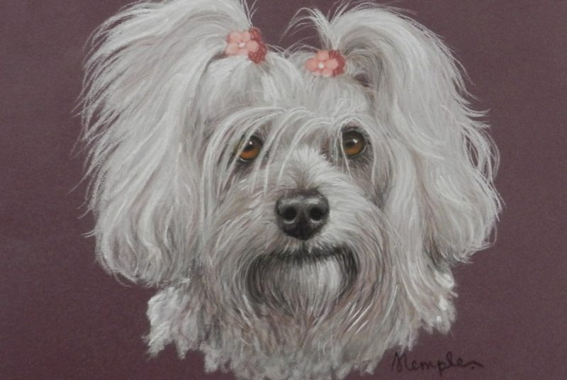 Pet Portraits in Pastel Pencils | Sandra Temple