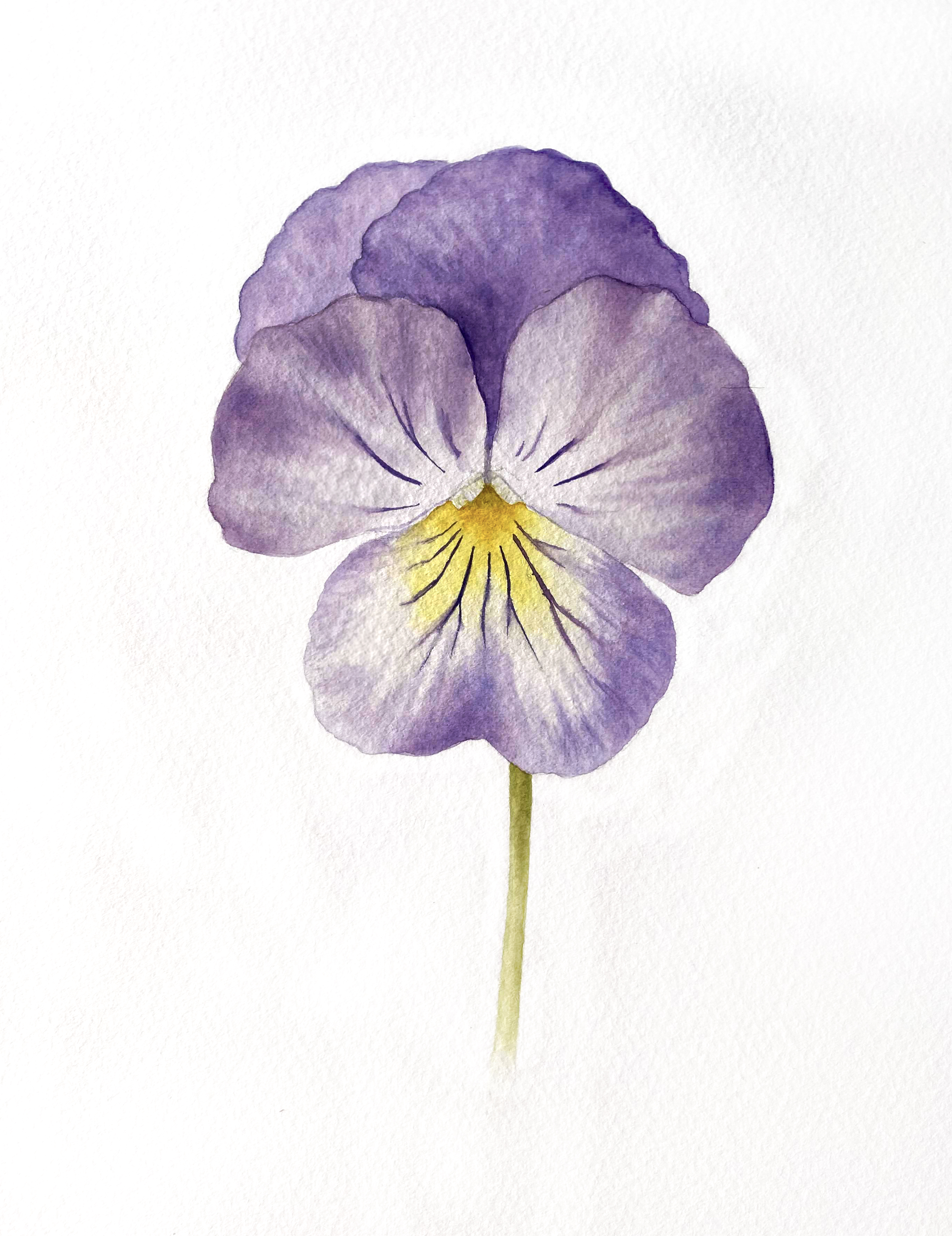 Painting a Pansy with Watercolour | Jessie Rose Ford