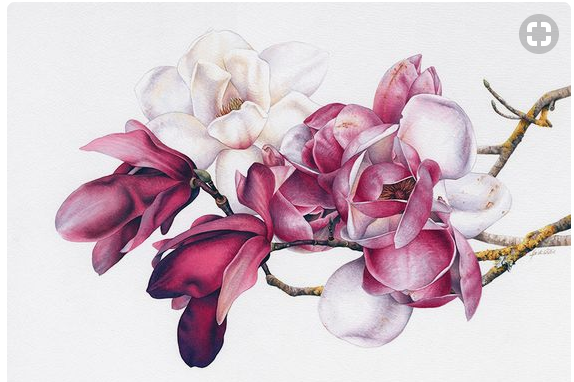 Watercolour Natural History and Botanicals | Heidi Willis