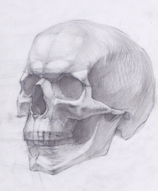 Drawing the Human Skull | Maria Nazyrova