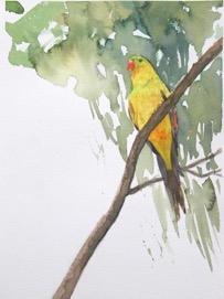 Watercolour For Beginners - Wildlife| Jan Lawnikanis