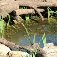 Water - Systems For The Home And Landscape - PDC